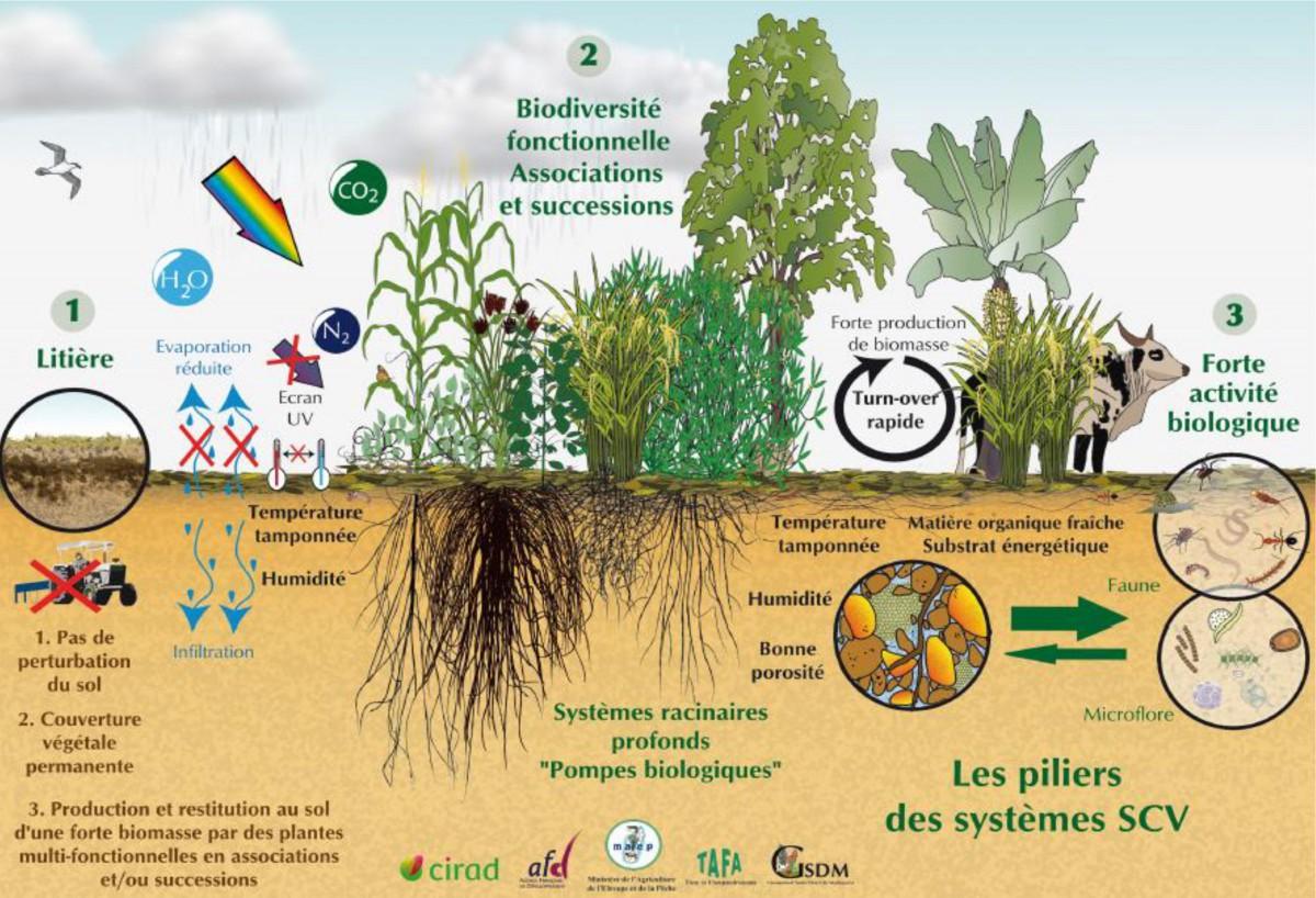 Jardinier paysagiste nuances v g tales for Jardinier paysagiste versailles